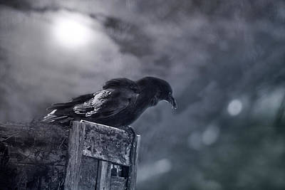 Photograph - Raven Twilight by Susan Capuano