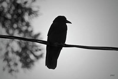 Photograph - Raven V Bw by David Gordon