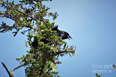 Photograph - Raven2 by Laurianna Taylor