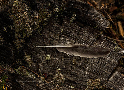 Photograph - Ravens Feather by Fred Denner