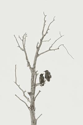 Photograph - Ravens In Winter by Scott Wheeler