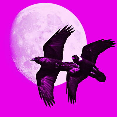Bif Digital Art - Ravens Of The Moon . Magenta Square by Wingsdomain Art and Photography