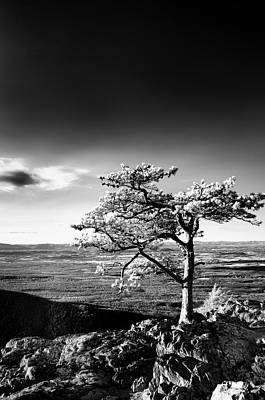 Photograph - Ravens Roost Ir Tree by Kevin Blackburn