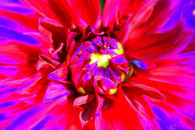 Photograph - Raving Beauty by Deborah  Crew-Johnson