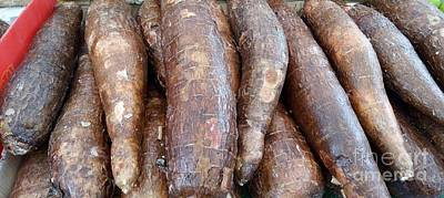 Photograph - Raw Root Cassava by Mudiama Kammoh