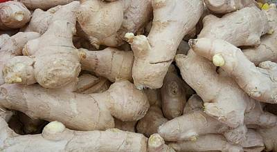 Photograph - Raw Root Ginger by Mudiama Kammoh