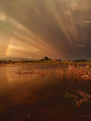 Peterson Nature Photograph - Nature's Light Show by James Peterson