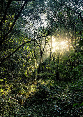 Photograph - Ray Of Light Through Green by Glen Sumner