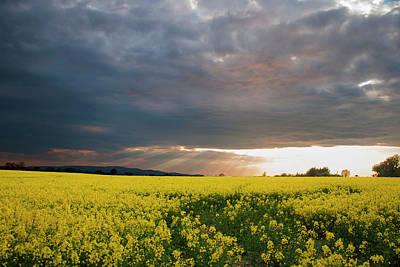 Photograph - Rays At Sunset by Rob Hemphill