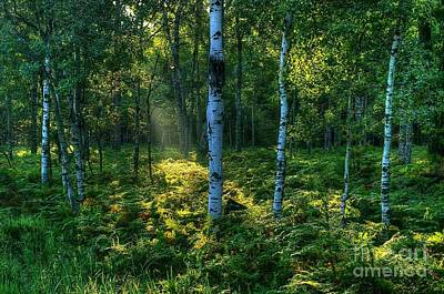 Photograph -  Rays In The Forest by Randy Pollard