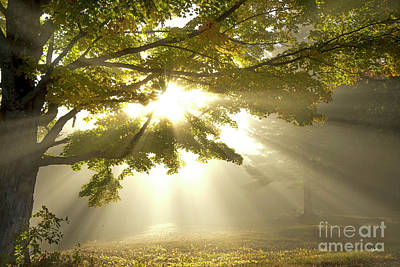 Photograph - Rays Of Hope by Alana Ranney