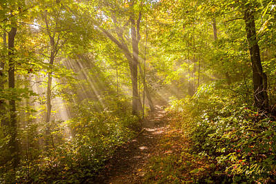 Photograph - Rays Of Light In The Forest by Rikk Flohr
