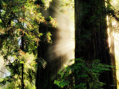 Photograph - Rays Of Light by Leland D Howard