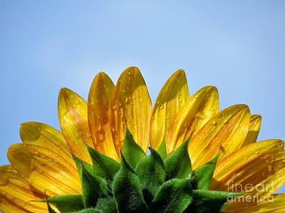 Photograph - Rays Of Sunshine by Chad and Stacey Hall