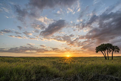 Photograph - Rays On Myakka by Jon Glaser