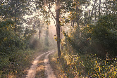 Rays Through Jungle Art Print by Hitendra SINKAR