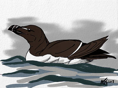 Razorbill Digital Art - Razorbill  by Michael Kallstrom