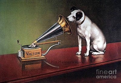 Dog Photograph - Rca Victor Trademark - To License For Professional Use Visit Granger.com by Granger
