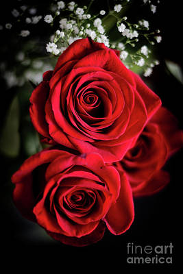Photograph - Red Roses  by Cheryl Baxter