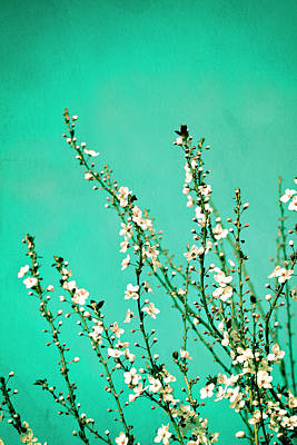 Cherry Blossom Photograph - Reach - Botanical Wall Art by Melanie Alexandra Price
