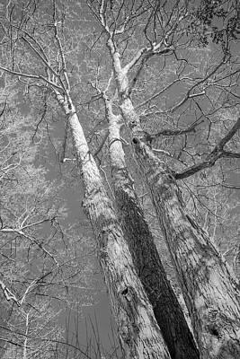 Photograph - Reach For Spring by LeeAnn McLaneGoetz McLaneGoetzStudioLLCcom