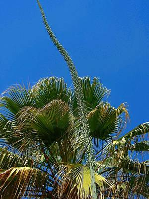 Photograph - Reach For The Sky  by Beth Akerman