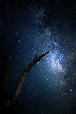 Photograph - Reach For The Stars by Mark Andrew Thomas