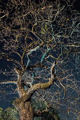 Photograph - Reach by Jocelyn Kahawai