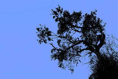 Photograph - Reach Of The Little Tree by John Williams