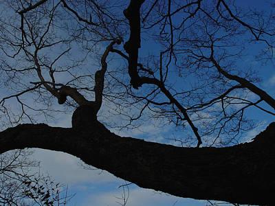 Cummington Photograph - Reach by Rosemary Wessel