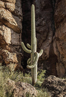 Photograph - Reaching Arms-img_807316 by Rosemary Woods-Desert Rose Images