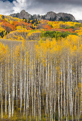 Photograph - Reaching Aspens by Gary Lengyel