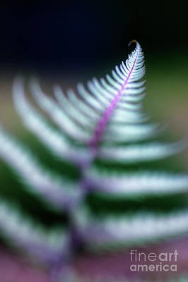Photograph - Reaching Fern by Scott Kemper