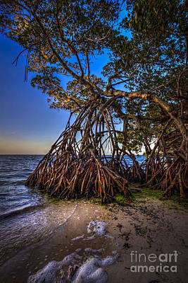 Palmetto Photograph - Reaching For Earth And Sky by Marvin Spates