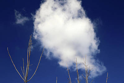 Photograph - Reaching For The Clouds by Mary Bedy