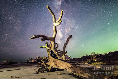 Photograph - Reaching For The Galaxy by Robert Loe