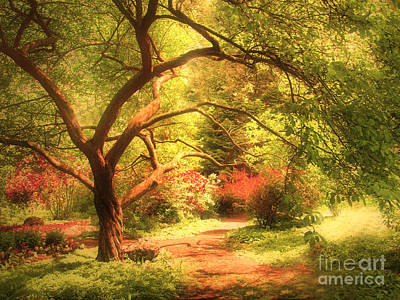 Summerland Photograph - Reaching For The Light by Tara Turner