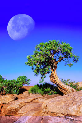 Photograph - Reaching For The Moon by Mike Stephens