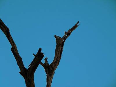 Photograph - Reaching For The Sky by Chris Mercer