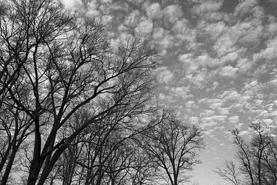 Photograph - Reaching For The Sky by Jane Eleanor Nicholas