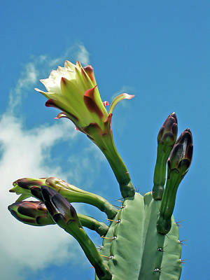 Photograph - Reaching For The Sky by Roger Mullenhour