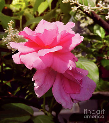 Photograph - Reaching For The Sky Wild Rose by Dave Nevue
