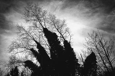 Photograph - Reaching For The Sky by Wim Lanclus