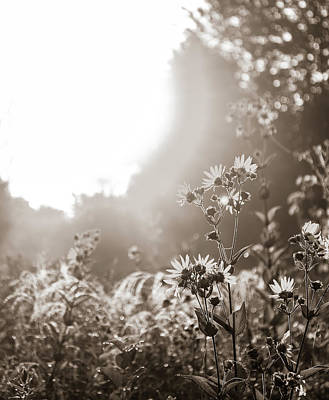 Photograph - Reaching For The Sun by Dan Sproul
