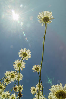 Photograph - Reaching For The Sun by Garry McMichael