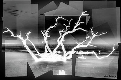 Photograph - Reaching For You Bw Driftwood Beach Jekyll Island Art by Reid Callaway