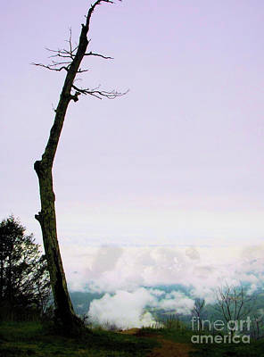 Photograph - Reaching In The Shenandoah by Nicole Angell