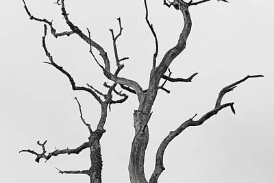 Reaching Art Print by Josh Baldo