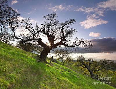 Reaching Shadow Through Dragon Oak Mt Diablo State Park California 2014 Art Print