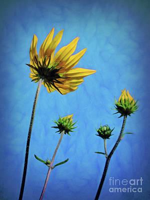 Photograph - Reaching Skyward by Sue Melvin